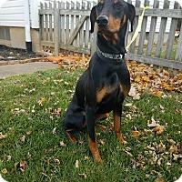 Adopt A Pet :: Maximus - New Oxford, PA
