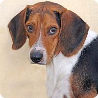 Adopt A Pet :: Lone Ranger - Encinitas, CA