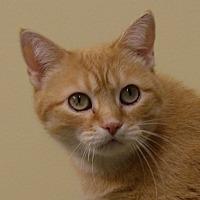 Adopt A Pet :: Noel - Monroe, MI