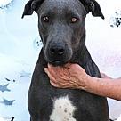 Adopt A Pet :: Leah
