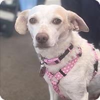 Adopt A Pet :: Bonnie - Rancho Santa Fe, CA