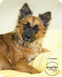 Australian Shepherd Mix Dog for adoption in Phoenix, Arizona - LouAnn