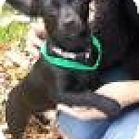 Adopt A Pet :: Bella - Marlton, NJ