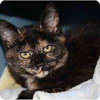 Adopt A Pet :: Autumn - Davis, CA