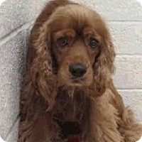 Adopt A Pet :: Charlie-Only $85 adoption fee! - Litchfield Park, AZ