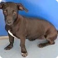 Adopt A Pet :: Amanda - Mahopac, NY
