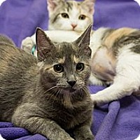 Adopt A Pet :: Dallas & Tulia - Chicago, IL