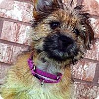 Adopt A Pet :: Nicoe-Adoption pending - Bridgeton, MO