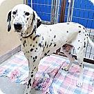 Adopt A Pet :: Ramona