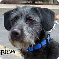 Adopt A Pet :: Daphne - Warren, PA