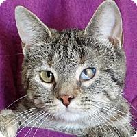 Adopt A Pet :: Rochelle - Renfrew, PA