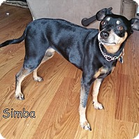 Adopt A Pet :: Simba (Courtesy Posting) - Malaga, NJ