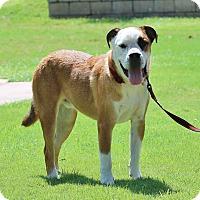 Adopt A Pet :: Frank - Tempe, AZ