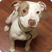 Adopt A Pet :: Jane - Homer, NY