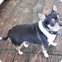 Adopt A Pet :: Simba - Umatilla, FL