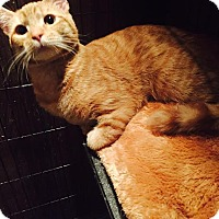 Adopt A Pet :: Monty - East Brunswick, NJ