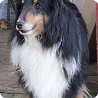 Adopt A Pet :: Gadget - Stony Brook, NY