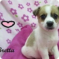 Adopt A Pet :: Bretta - Bartonsville, PA