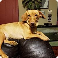 Adopt A Pet :: Greta - Fairmont, WV