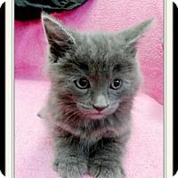 Adopt A Pet :: Expresso - Trevose, PA