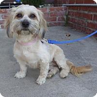 Adopt A Pet :: Paisley - Los Angeles, CA
