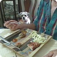 Adopt A Pet :: Gracie - Inver Grove, MN