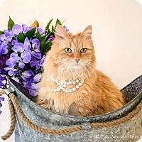 Adopt A Pet :: Charlie Mae - Garden City, MI
