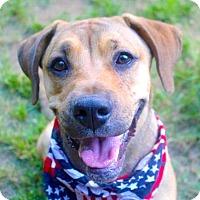 Adopt A Pet :: Sif - Austin, TX