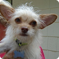 Adopt A Pet :: Casper - Harrisonburg, VA