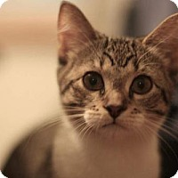 Adopt A Pet :: Swee'Pea - Whitewater, WI