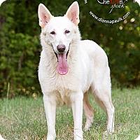 Adopt A Pet :: Trixie - Montgomery, AL