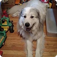 Adopt A Pet :: Chewy (aka Biggie) - in MA - Lee, MA