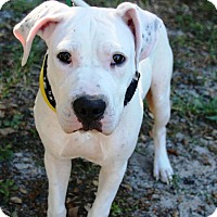 Adopt A Pet :: Ghost - Ft. Myers, FL