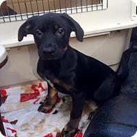 Adopt A Pet :: DJ Suki - san diego, CA