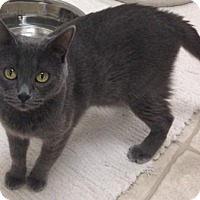 Adopt A Pet :: Justine - Cloquet, MN