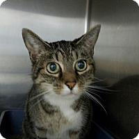 Adopt A Pet :: Kitty - Elyria, OH