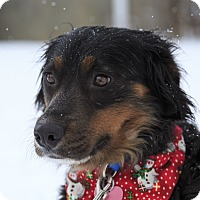 Adopt A Pet :: Gougoune - Ile-Perrot, QC
