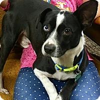 Adopt A Pet :: Madoc - La Verne, CA