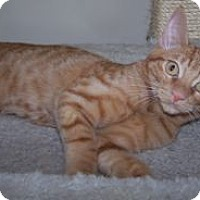 Adopt A Pet :: K-Peanut3-Redman - Colorado Springs, CO
