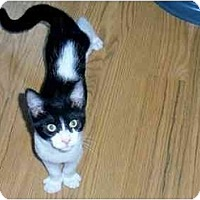 Adopt A Pet :: Skunk - Odenton, MD