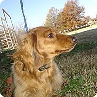 Adopt A Pet :: Rufus - Stilwell, OK