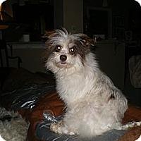 Adopt A Pet :: Kiki - Apex, NC