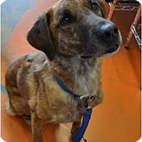 Adopt A Pet :: Jett - Pending! - kennebunkport, ME