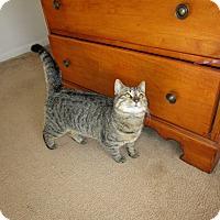 Adopt A Pet :: Trixie - Speonk, NY