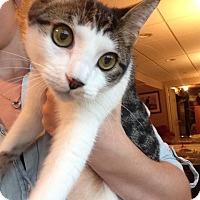 Adopt A Pet :: Finn - Colmar, PA
