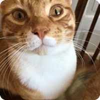 Adopt A Pet :: Ginger - Colmar, PA
