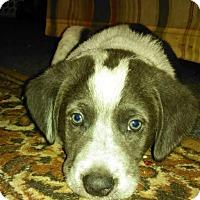 Adopt A Pet :: Petey - Charlestown, RI