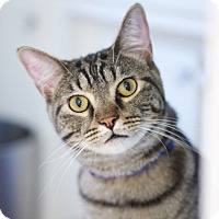 Adopt A Pet :: Bronson - Homewood, AL