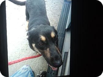 German Shepherd Dog Mix Dog for adoption in springtown, Texas - Asia