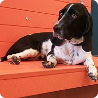 Adopt A Pet :: Anna - New York, NY
